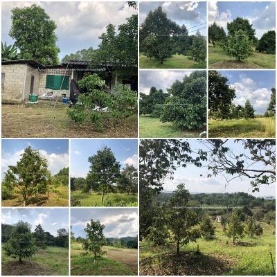 ไร่สวน 13000000 จันทบุรี ท่าใหม่ ทุ่งเบญจา