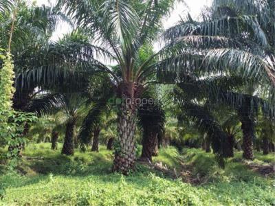 ที่ดิน 10500000 จันทบุรี มะขาม อ่างคีรี