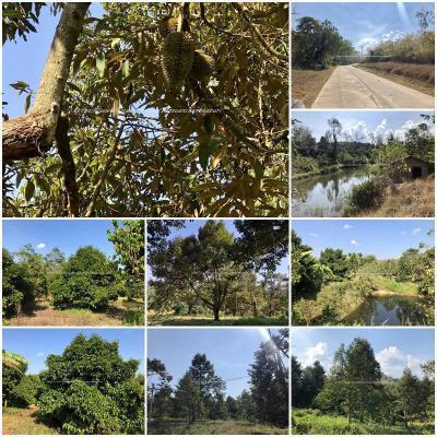 ไร่สวน 18600000 จันทบุรี โป่งน้ำร้อน ทับไทร